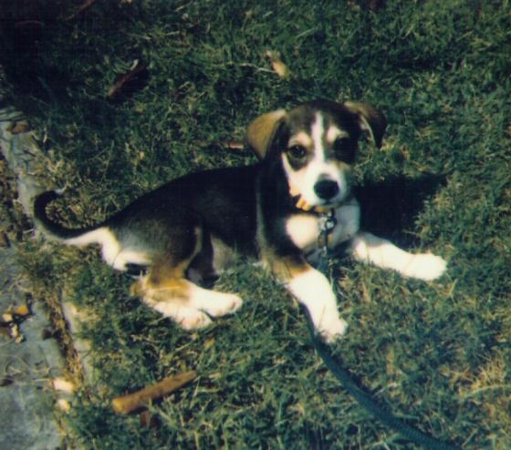 Cooper puppy