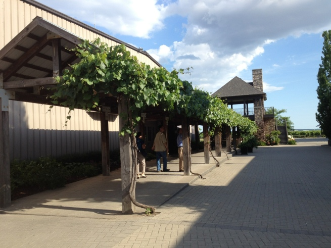 Grape vines on a covered walkway at Hillebrand Winery